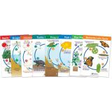 Life Cycles Bulletin Board Chart Set of 8, Grades 1-3