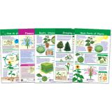 All About Plants Bulletin Board Chart Set, Grades 3-5