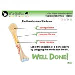 Interactive Whiteboard Lesson Plans, Cells, Skeletal & Muscular Systems