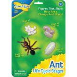 Life Cycle Stages, Ant