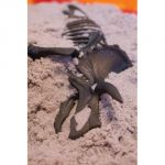 Kinetic Sand™ Dino Dig, Triceratops