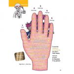 Dr. Bonyfide Presents Bones of the Hand, Arm, and Shoulder, Book 1