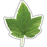 Woodland Whimsy Green Leaf Cut-Outs